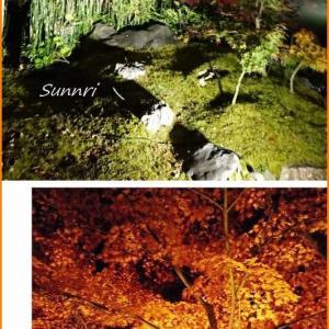 京都紅葉狩り 永観堂