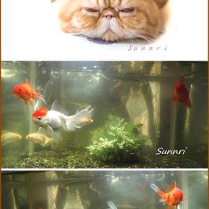 金魚君元気です