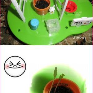 孫のトマトの水栽培