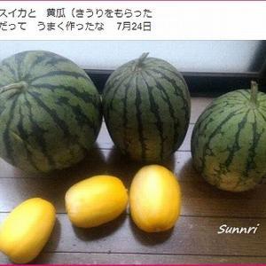 頂き物 スイカ&黄瓜