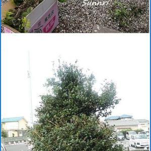 木を剪定しましたが 変わり映えしないです
