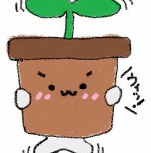 花の苗を頂きました