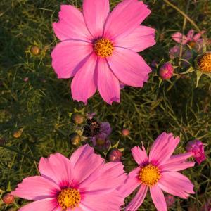 秋を感じダージリンオータムナルで豊かになる!