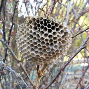 【ネット】新発売の「スズメバチ巣駆除剤」が物議に 「生態系壊す危険もある」の声も