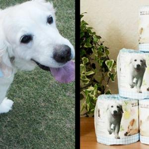 高額転売のトイレットペーパーを買うぐらいなら、ちょっと高いけど補助犬や障がい者の支援になる「盲導犬応援トイレットペーパー」を買おう!