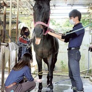 【静岡大学馬術部】「馬の年間維持費480万円が支払えないと殺処分する事になります。寄付などで助けて下さい」騎乗バイトできず