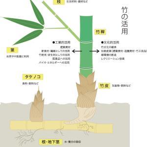 中国が開発した究極のバイオ素材に、日本も焦り?=中国メディア