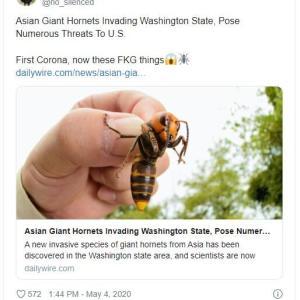 【虫】「殺人バチ」オオスズメバチの巣、米国内で初めて発見