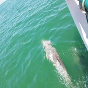 アデレードの格安観光でイルカを見られました