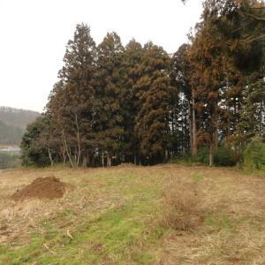 益子町・大六天の森