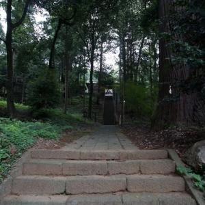 村檜神社の御神木