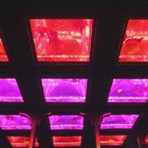 日本橋「アートアクアリウム2019」行きたいっす
