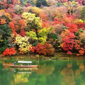 紅葉はなぜ起こる?それは葉の光合成と気温に関係があるんだ。
