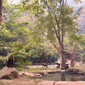 衝撃だらけの楽しい動物園Taman Safari Bogor
