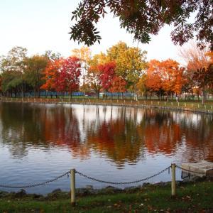 秋の紅葉山公園(石狩市)はその名の通り紅葉が素晴らしい