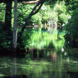 秘境・神の子池。リバーサルフィルム・fortiaによる奇跡の1枚