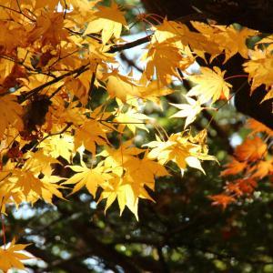 道庁前庭の紅葉は11月でも美しい。札幌市街のど真ん中に紅葉の名所発見