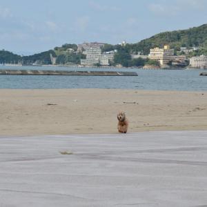 海に行ったった!