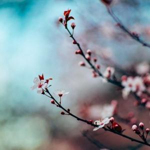 春のアトピーお悩み解消スーパーハーブ