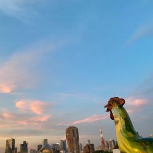 [コピー]美しい夕日を眺めてスーパーハーブ「ミラクルアムリット」を食べれば明日への希望に変わる