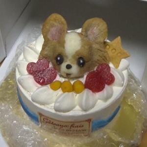 目の中に入れても痛くないくらい可愛いけど、目玉を舐められたとき地獄の痛みを味わった愛犬のお誕生日(長っ!