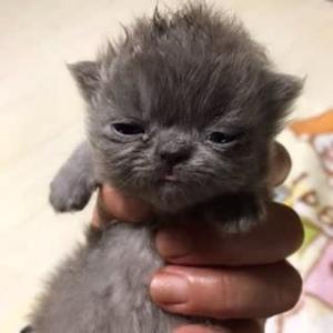 お出かけ赤ちゃん猫