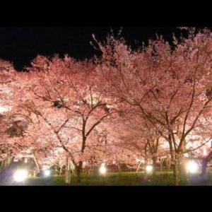 コロナの蔓延する歌舞伎町で愛する人にサヨナラ!