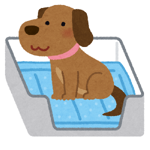 室内飼いの子犬にトイレの躾を簡単にマスターさせるたった3つのポイント