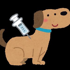 副作用が怖い!パグの子犬にワクチン接種をしてきた話