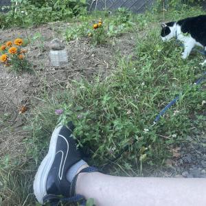 外に出たがる猫さん。家に帰りたいわたくし。