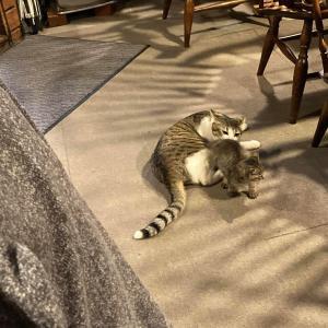 猫の社会性を目の当たりにして参りました