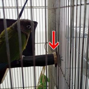 悪鳥の破壊工作