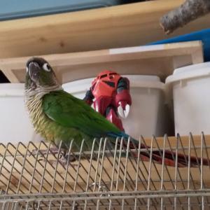 人も鳥も家の中は安全かも