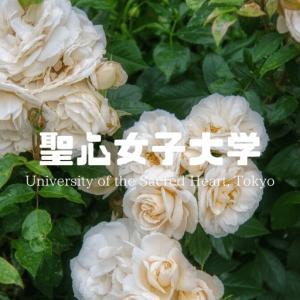 聖心女子大学の評判・偏差値・キャンパスを紹介!【哲学に強み】