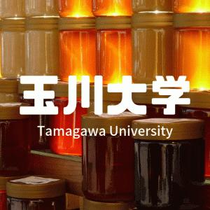 【2019】玉川大学の最新偏差値・評判・キャンパスの紹介!