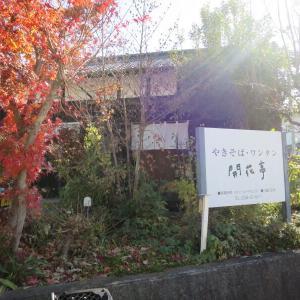 今日の昼散歩 11月21日(木)
