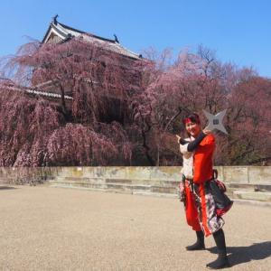 今日の昼散歩 2020年3月26日(木) 上田城跡公園