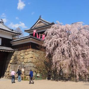 上田城千本桜まつりは中止だが・・・ 2020年4月4日(土)