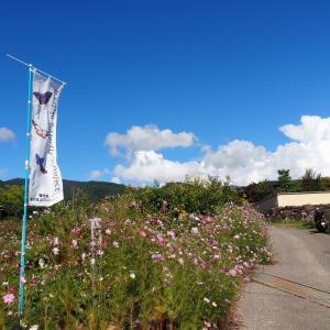 今日の浅間山 2020年9月28日(月) 糠地バタフライガーデン リベンジ