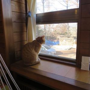今日の浅間山 2020年11月30日(月) 猫のいるCAFE 小諸・ガーディアン