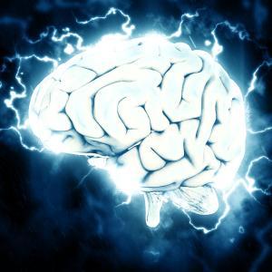 脳は鍛えられる:意志力を鍛えることで脳は発達する