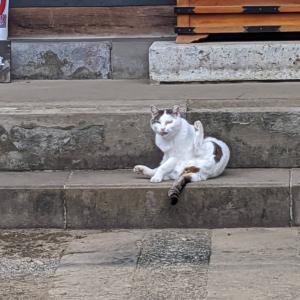 猫スポット 護国寺