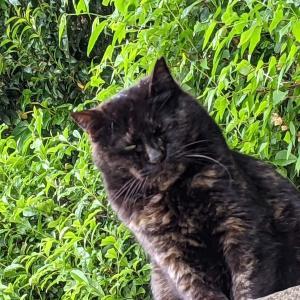 猫スポット 代々木八幡宮