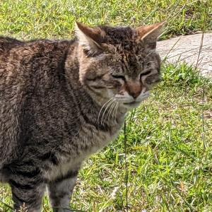 猫スポット 江東区立若洲公園