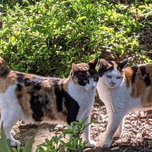 猫スポット 荒川遊園界隈