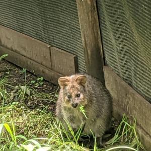 こども動物自然公園 東園 クオッカは微笑まない