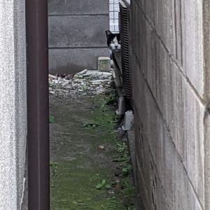 猫スポット 荒川自然公園~南千住界隈