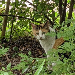 猫スポット 大井ふ頭中央海浜公園 おかわり