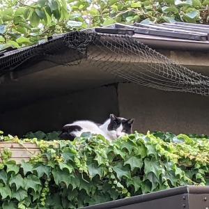 猫スポット 善福寺川緑地界隈