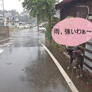 台風19号、我が家の周りは無事!